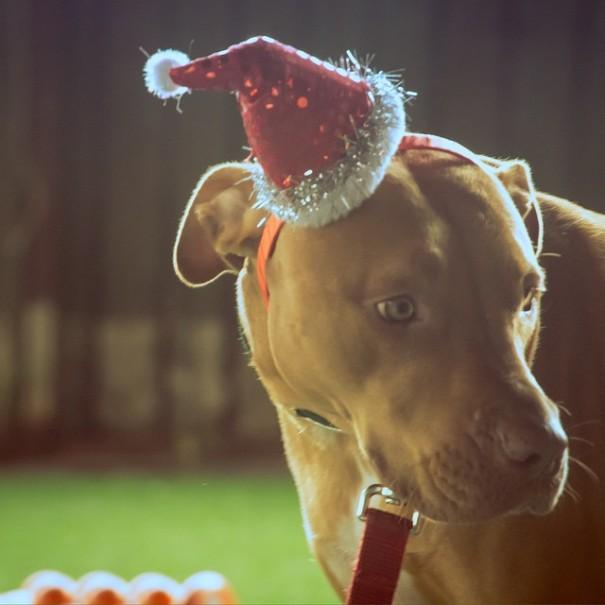 Christmas Cora